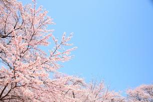 春の空の写真素材 [FYI00437104]