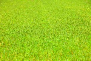 春の緑の写真素材 [FYI00437112]