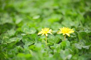 春の花の写真素材 [FYI00437120]