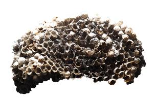 蜂の巣の一部の写真素材 [FYI00437284]