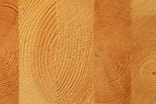 木の断面の写真素材 [FYI00437293]