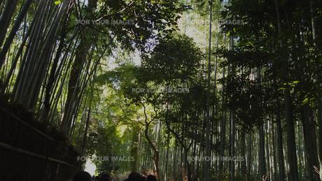 嵐山 竹林の写真素材 [FYI00437302]