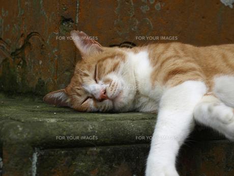 眠っているトラ猫の写真素材 [FYI00437327]