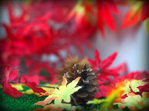 秋のイメージの写真素材 [FYI00437337]