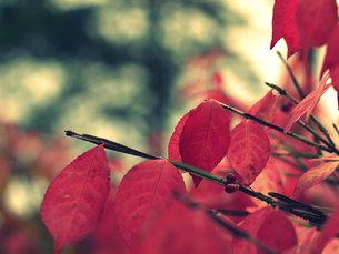 秋の予感の写真素材 [FYI00437342]