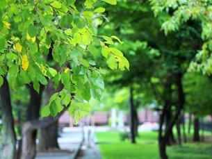 公園の木立の写真素材 [FYI00437347]