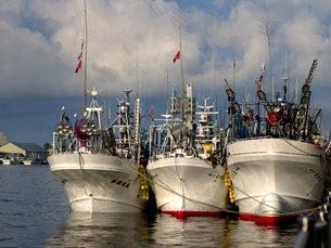 並んだ漁船の写真素材 [FYI00437352]