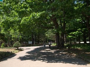 初夏の公園の道の写真素材 [FYI00437361]