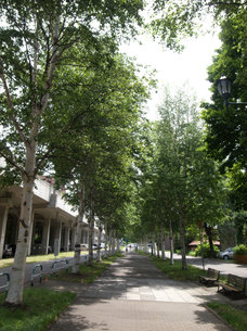 白樺の並木道の写真素材 [FYI00437373]