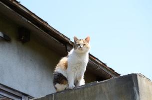 猫がのぼったの写真素材 [FYI00437398]