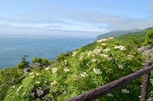 岬の風景の写真素材 [FYI00437401]