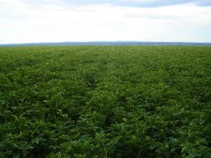緑の畑の写真素材 [FYI00437462]