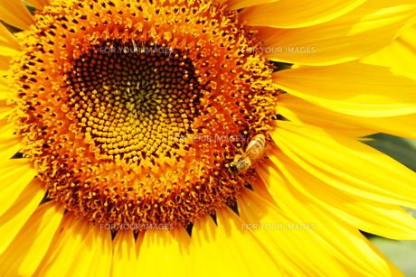 夏の日の写真素材 [FYI00437496]