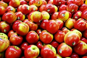 appleの写真素材 [FYI00437508]