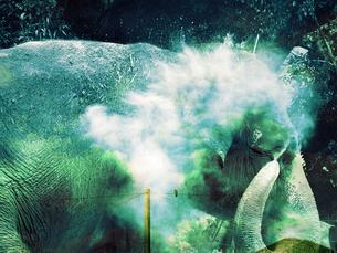 鳥の夢を見る象の素材 [FYI00437546]