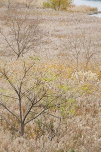 枯れ野の写真素材 [FYI00437587]