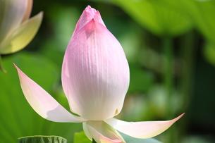 花の写真素材 [FYI00437757]