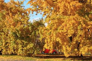 秋の写真素材 [FYI00437758]
