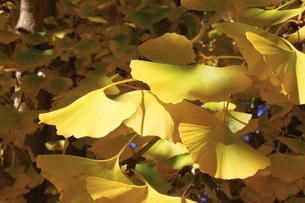 秋の写真素材 [FYI00437766]