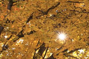秋の日差しの写真素材 [FYI00437771]