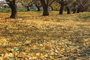 秋の写真素材 [FYI00437802]