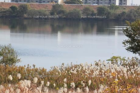 秋の川の素材 [FYI00437838]