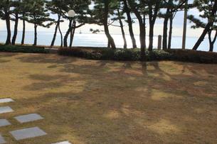 芝生の庭の写真素材 [FYI00437841]