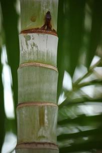 竹の素材 [FYI00437895]