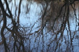 池の写真素材 [FYI00437977]