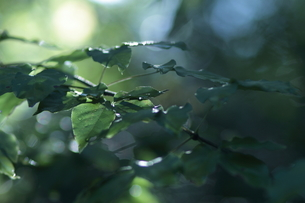 木漏れ日の写真素材 [FYI00438170]