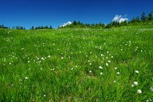 青々としたお花畑の写真素材 [FYI00438214]