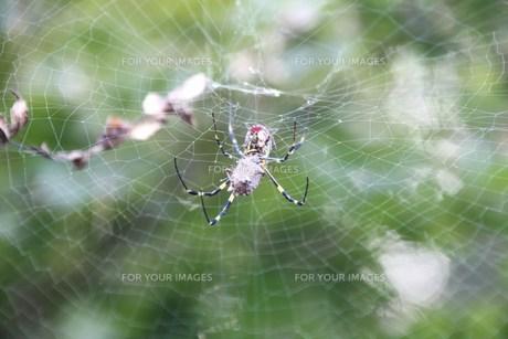 蜘蛛の巣の写真素材 [FYI00438241]