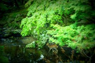 奈良の風景の写真素材 [FYI00438245]