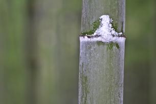 竹の写真素材 [FYI00438684]