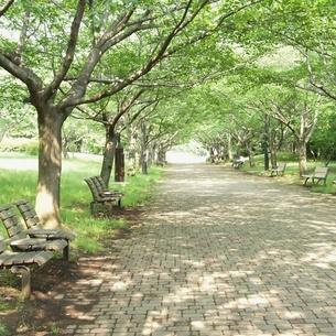 公園のベンチの写真素材 [FYI00438944]