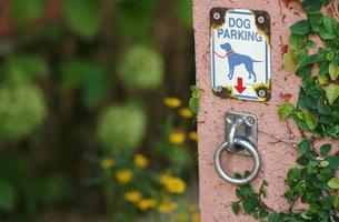Dog Parkingの写真素材 [FYI00438951]