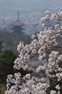 奈良の春の写真素材 [FYI00438955]