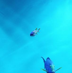 水族館の魚の写真素材 [FYI00439002]