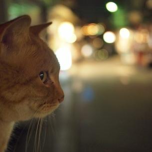 ポーズをとる猫(横顔)の写真素材 [FYI00439010]