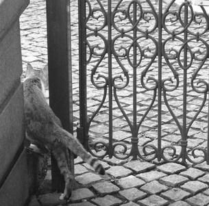 お散歩中の猫の写真素材 [FYI00439012]