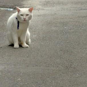 箱根の看板猫の写真素材 [FYI00439013]