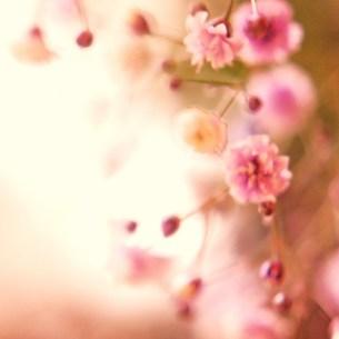 ピンクの花の写真素材 [FYI00439021]