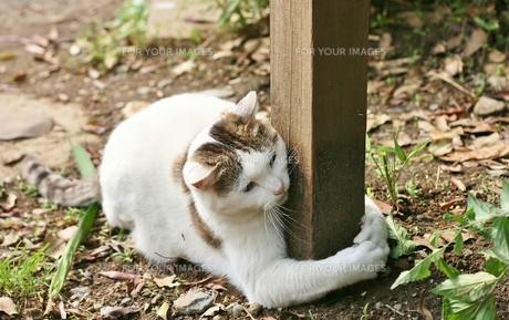猫の腕の写真素材 [FYI00439023]