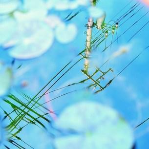 水面に映る電柱の写真素材 [FYI00439029]