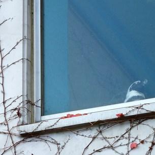窓から外を眺めるペンギンの写真素材 [FYI00439031]