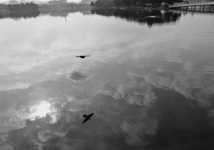 池に写る雲と鳥の写真素材 [FYI00439060]