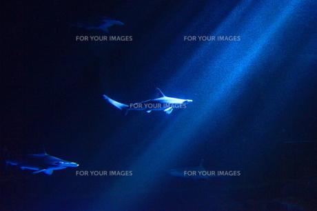 サメのシルエットの素材 [FYI00439257]