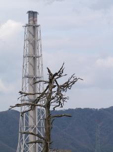 煙突と枯れ木の写真素材 [FYI00439303]