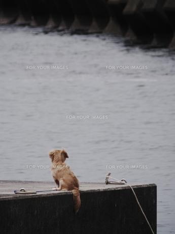 海を見る子犬の写真素材 [FYI00439344]