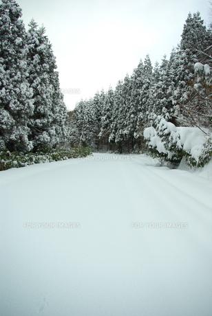 雪に覆われた森の中の道路の写真素材 [FYI00439359]